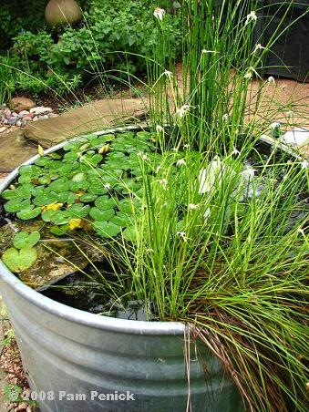 How To Make A Container Pond In A Stock Tank Pictures to pin on ...