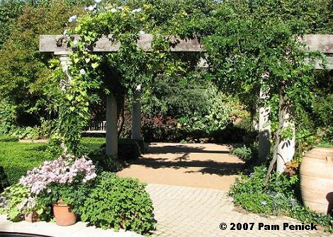 Don't you just love this wisteria-and-morning glory cloaked pergola in my  garden? - Arbors & Pergolas: Garden Bloggers' Design Workshop Digging