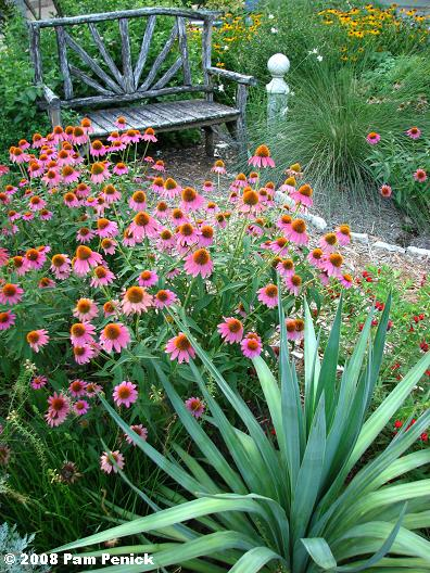 Sharp plants look sharp in summer | Digging