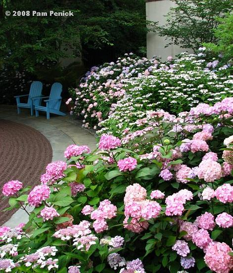 A visit to Chanticleer Hydrangeas House Garden DiggingDigging