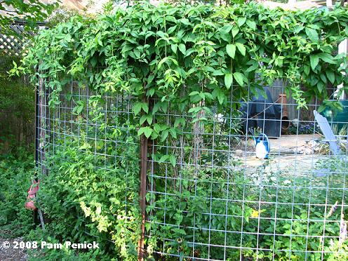 Trellis screen, one year later   Digging