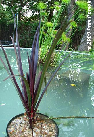 how to build a small garden pond from a container