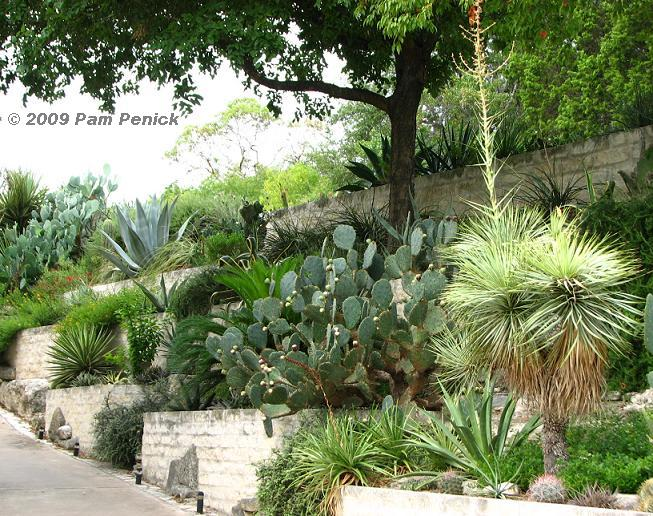 29 best images about cactus garden walkway design cactus for Cactus garden designs