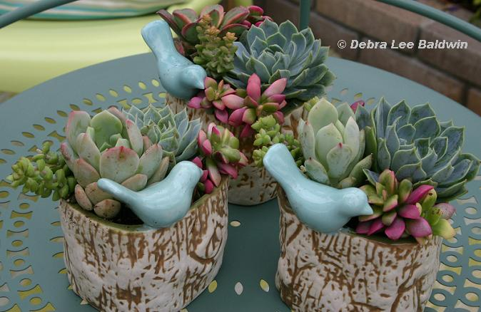 Delightful Read This: Succulent Container Gardens