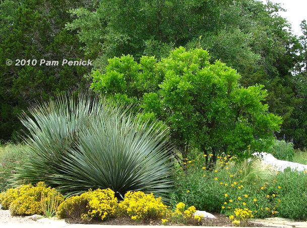 Garden Designers Roundtable: Designing with Native Plants | Digging
