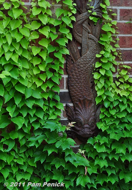 Gallery For Ivy Wall Garden