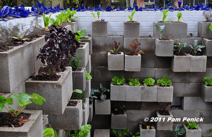 Edible wall! Cinderblock wall vegetable garden wows at Big Red Sun ...