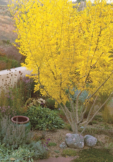 Read This Waterwise Plants For Sustainable Gardens