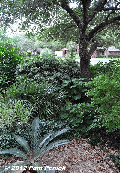What Plants Grow Under Live Oak Trees : Southwestern plants french style tropical verve in the