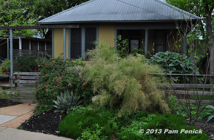 Drive-By Gardens: Bouldin neighborhood in South Austin | Digging