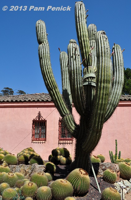 Visit to lotusland part 2 house garden with cactus and for Cactus argentina