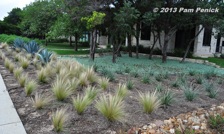 Drive By Gardens Xeric mass planted garden replaces a