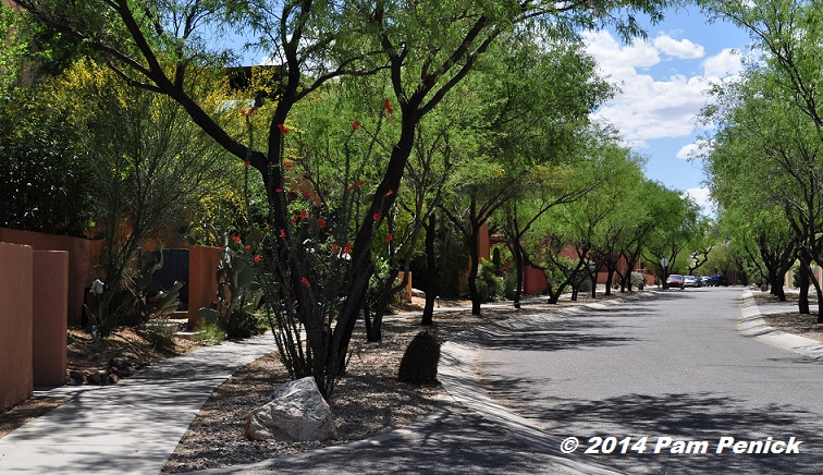Living Colorfully In Civano Tucson S Green Home Community