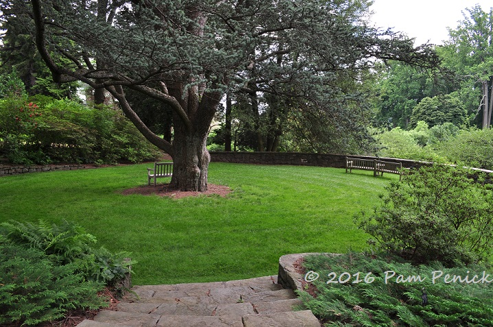 formal design elements like this circular lawn anchored by a massive old pine with a low wall making a sort of council ring about the space balance the