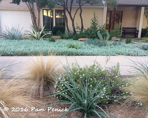 In The Hell Strip Between The Sidewalk And The Street, Red Yucca, Mexican  Feathergrass, And Blackfoot Daisy U2014 Texas Natives All U2014 Are Tough As Nails  Given ...