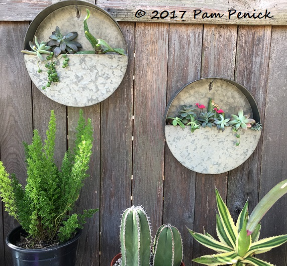 New Galvanized Wall Planters Hold Succulent Cuttings Digging