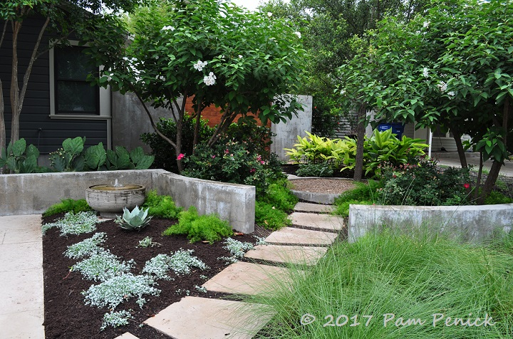 Modern easy care garden of austin designer b jane for Easy care shrubs front house