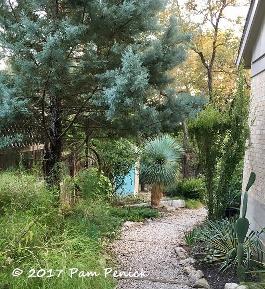 Evergreen combos (mostly) for Austin | Digging