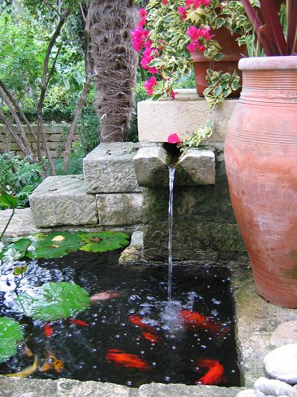 Small goldfish pond - photo#8