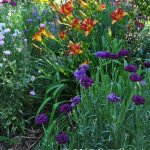 Flower garden at Daphne Jeffers' home in Austin, TX