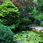 Waterlily pond in the Japanese Garden at Hillwood Estate in Washington, D.C.