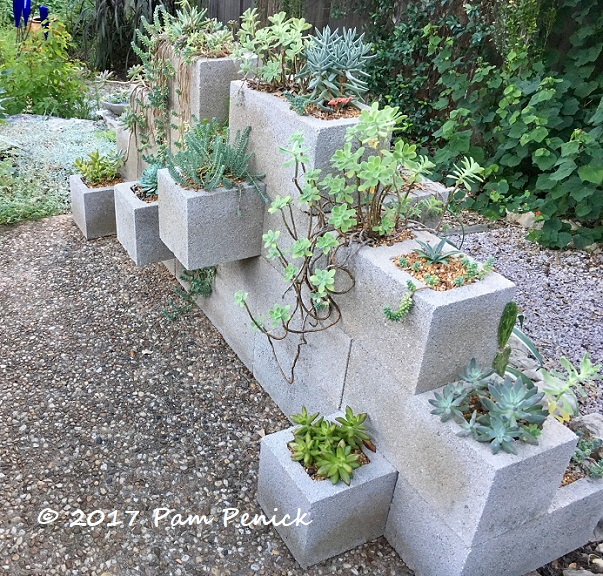 Potted Patio Where Succulents Rule DiggingDigging