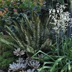 Fern, lily, and other plants in garden of Buell Steelman and Rebecca Sams of Mosaic Gardens in Eugene, Oregon