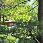 Teahouse and pond in the Japanese garden at Fort Worth Botanic Garden in Texas