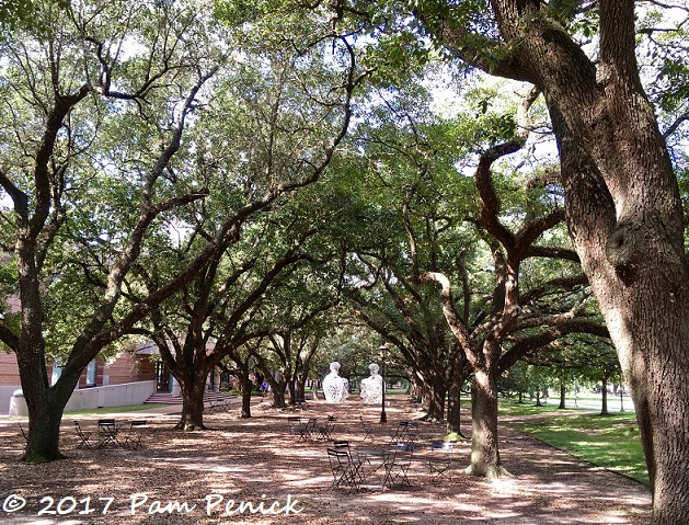 Foliage architecture (and art) on Rice University campus | Digging