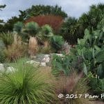 Dry garden plants like opuntia, sotol, and yucca in the Lakemoore Drive Garden designed by Curt Arnette of Sitio Design in Austin, TX