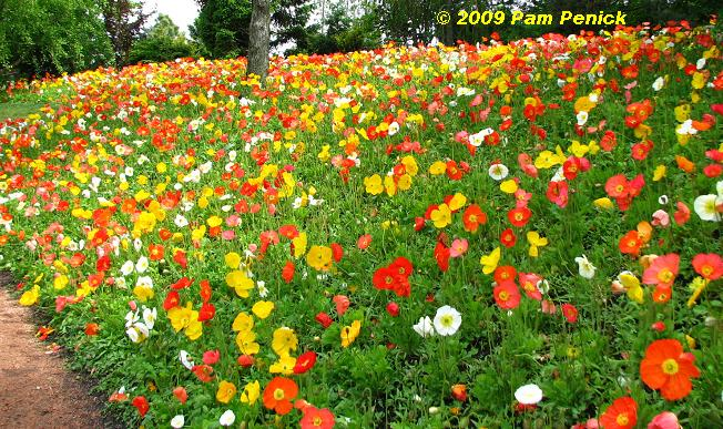 Youu0027ll See This Hillside Of Poppies On Every Spring Flingeru0027s Blog If They  Visited The CBG. Photos Cannot Convey How Overwhelming The Sight Of Them  Was, ...