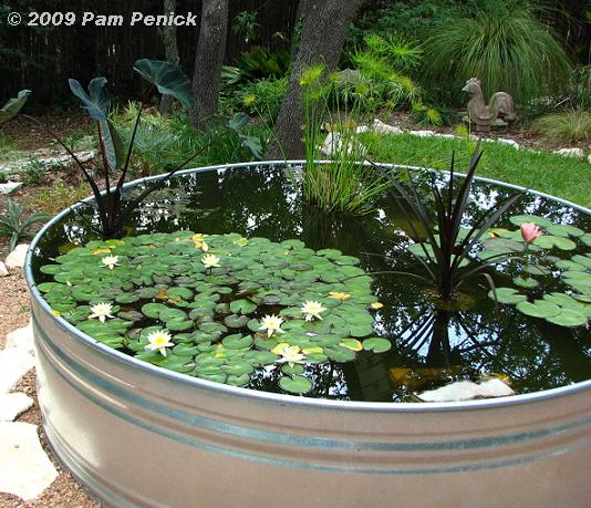 Gentil Stock Tank Fish Pond Images Lobster And