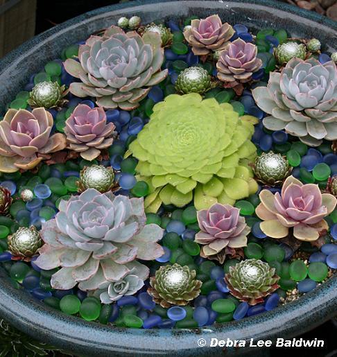Succulent Dish Garden Care Garden Inspiration