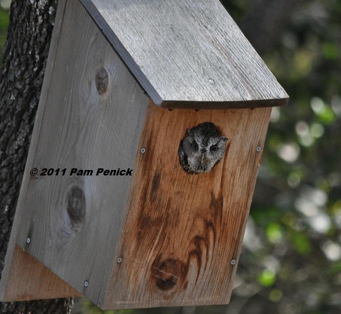 Dove Bird House Plans - Escortsea