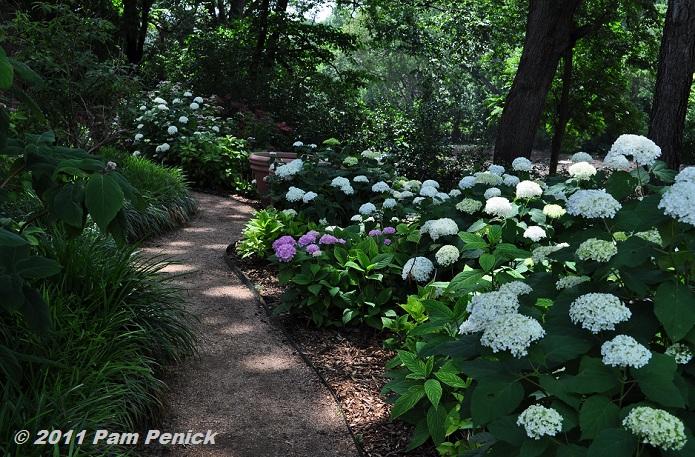 Hydrangea Gardens For Shade Garden Ftempo