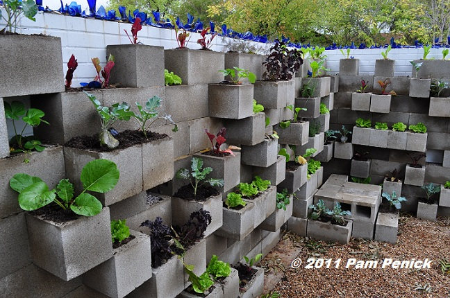 Edible Wall Cinderblock Vegetable Garden Wows At Big Red Sun