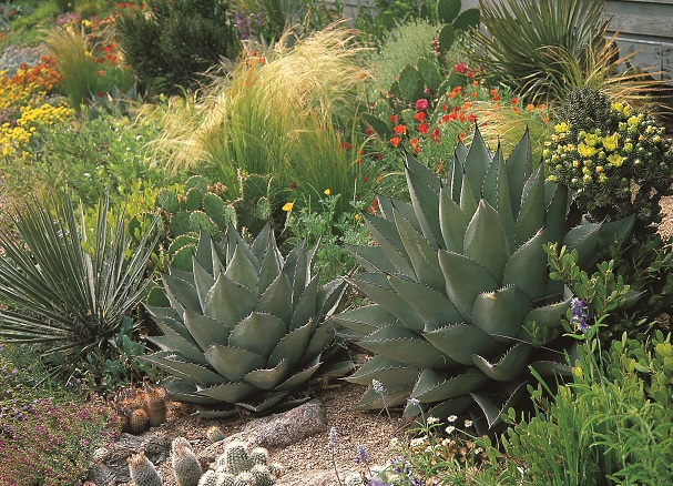 waterwise plants for sustainable gardens 200 drought tolerant choices for all climates