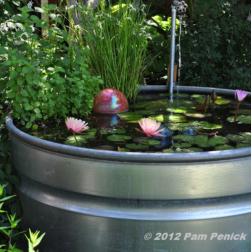 Catherine Recently Moved Her 4 Foot Diameter Tank From A Focal Point  Position In Her Small Back Lawn To Tuck It Into A Garden Bed Near Her Patio.