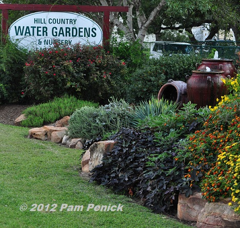 Winner of the Hill Country Water Gardens & Nursery Giveaway | Digging