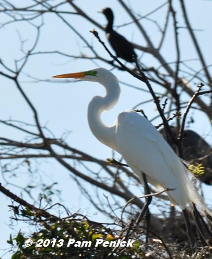 Lake Livingston I Presume Birding And Boating In The