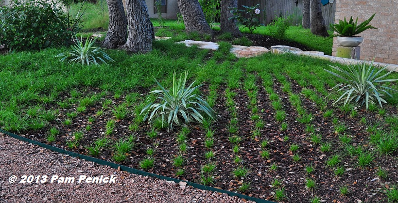 How To Plant A Sedge Lawn Digging