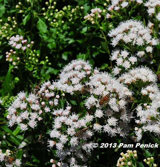 Digging page 264 of 810 cool gardens in a hot climate clouds of skippers and other butterflies and bees flitted around the blossoms like the paparazzi around kim kardashian mightylinksfo