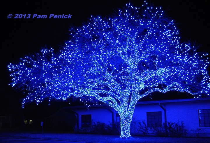 spectacular lighted trees bring holiday joy in johnson city digging