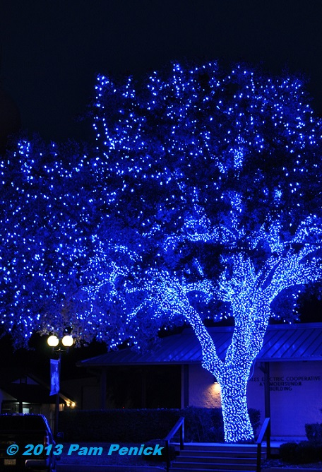 Or A Blue Christmas
