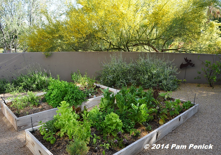 Superieur Color Drenched Walls And Desert Beauty In Steve Martino Designed. Vegetable  Gardens. 10 For Arizona Spring Planting Season. High Desert Gardening