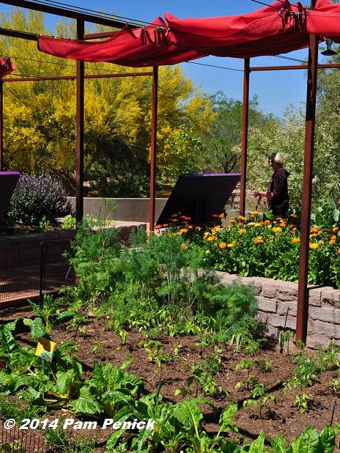 Visit To Desert Botanical Garden And Chihuly Exhibit Edible Garden Palo Verde Splendor And