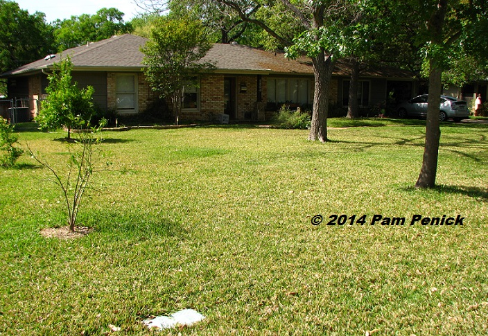 Drive-By Gardens: Lawn-gone and neighbor-friendly in central Austin ...