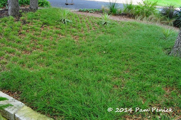 Sedge Garden Rec Garden Ftempo
