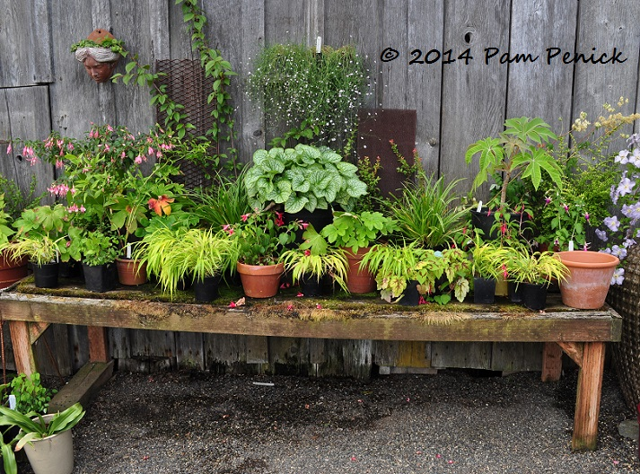 A Barn In Back Of The House Serves As Retail Area Where Plants Are Ealingly Displayed Vignettes On Tables And Ground
