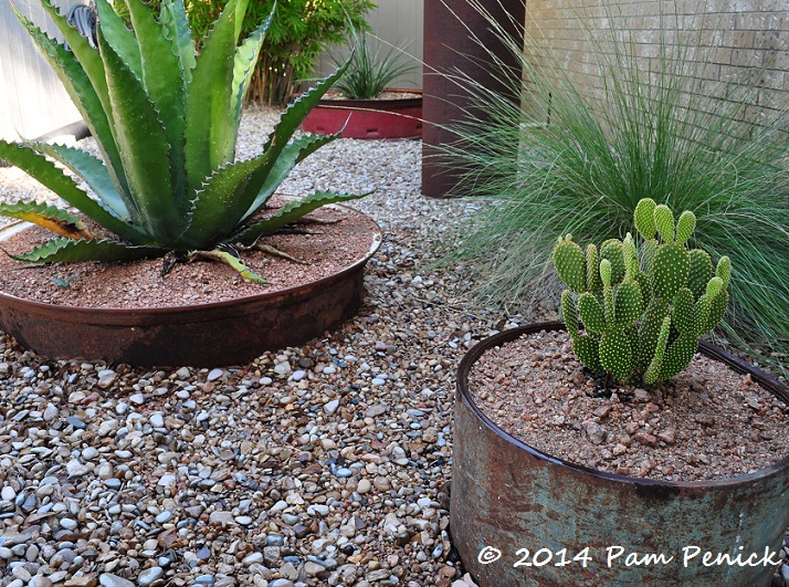 Succulent and cactus container garden thrives under Star ... on
